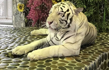 Hayvanat Bahçesi - Pattaya Tayland